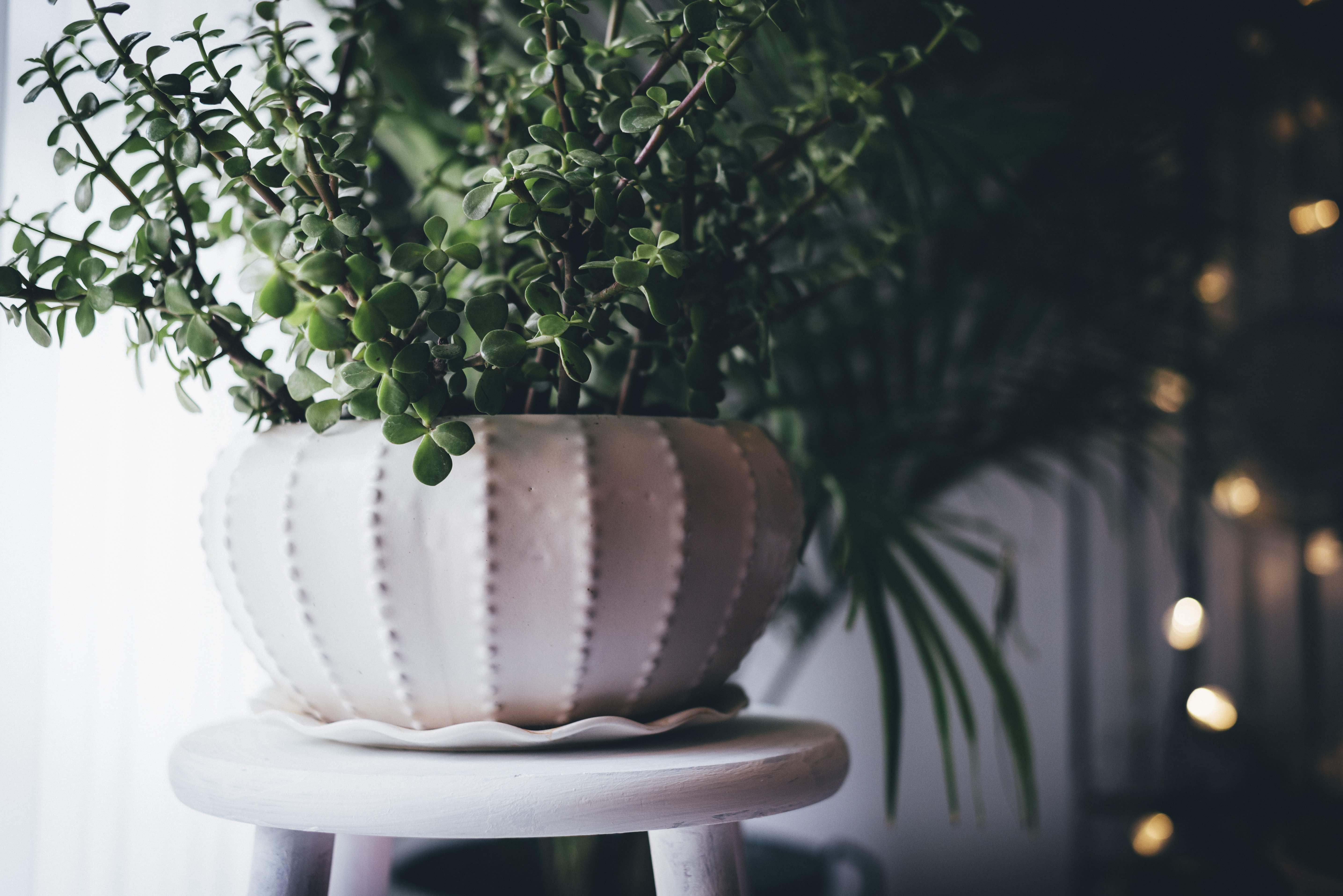 houseplant stock